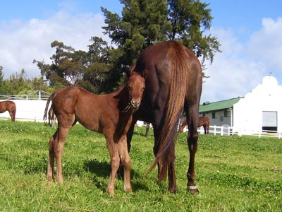 Var x Golden Treat colt 1/08/10