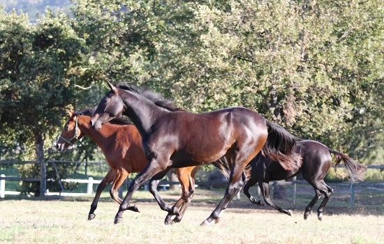 Zavaroni (front) and Dance Critic enjoying the paddocks at Avontuur before to long drive to Johannesburg.