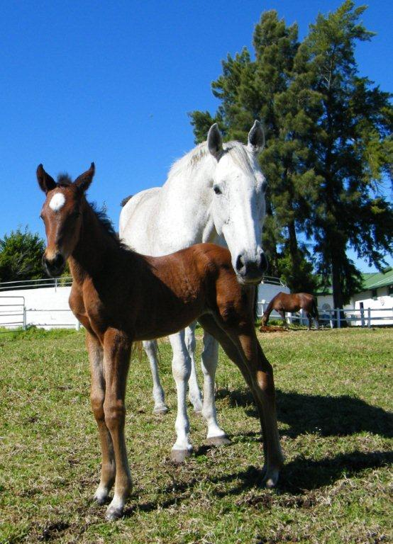 Sarabande and her 2013 Dynasty foal.