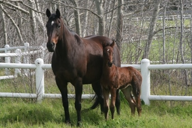 Gimmethegreenlight and her filly, Aug 2013