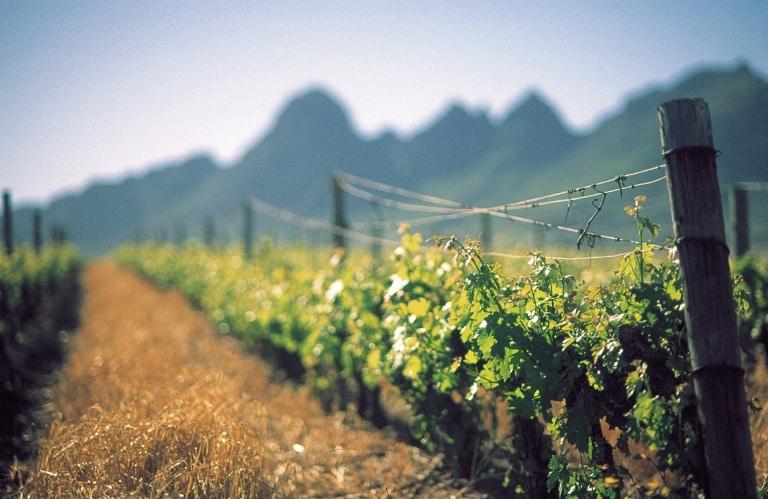 Vineyards against the Helderberg