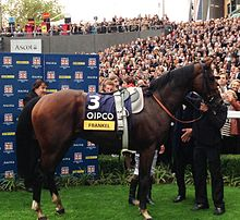 Frankel in the winners enclosure after his last win.