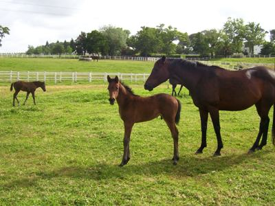 Legal Eagle as a foal at Avontuur in 2011
