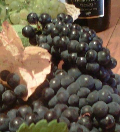 Harvest time in the tasting room